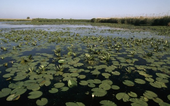 Aquatic vegetation on the Danube. Danube Delta, Romania Project number: RO0003 Project number: 9E0060