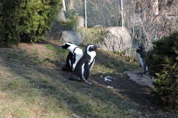 balint_nap11_pingvinek