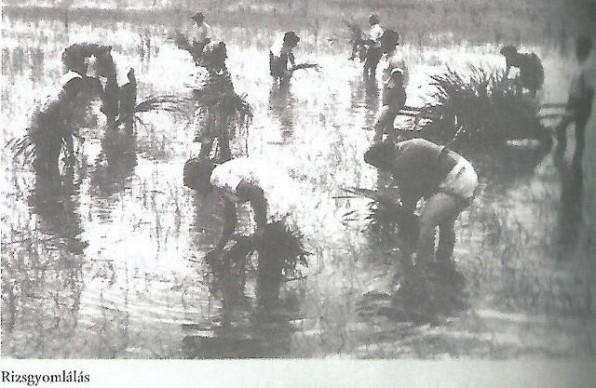 rizsfoldeken