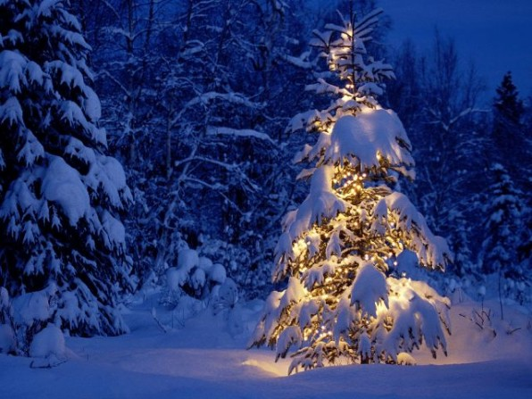 fenyo_havas