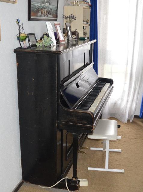 zongora6