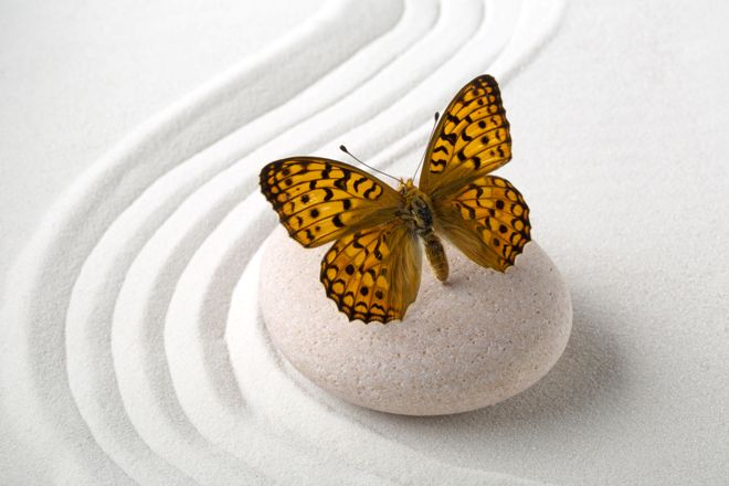 szarnyalo pillangok 3