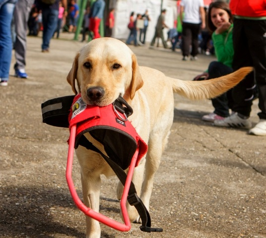 barathegyi kutyaiskola 4