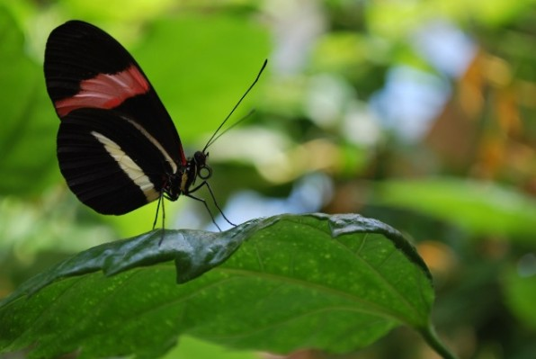 pillangok 1