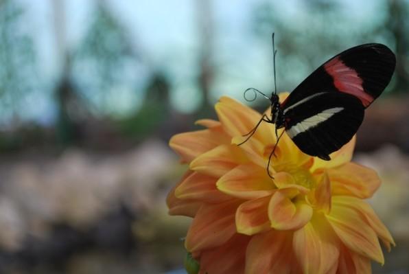 pillangok 2