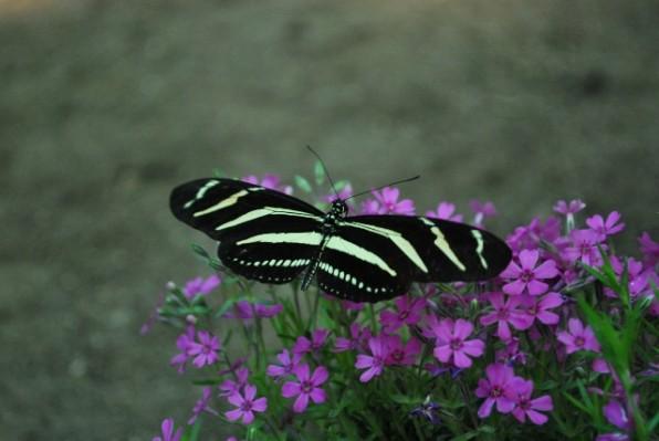 pillangok 3