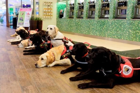 Kutyajó ünnep – Vakvezető kutyák vendégeskedtek a plázában