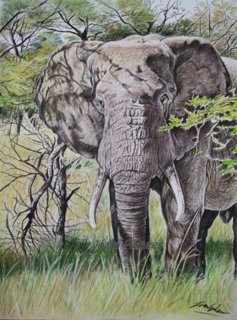 elefantbika0
