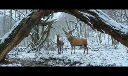 Február 26-án kezdődik a Magyar Filmhét