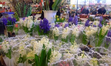 Tavaszi színek, nőnap előtti virágvásár a kecskeméti piacon