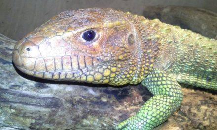 Hüllő Zoo Kiállítás és Börze a Hírös Agórában Kecskeméten
