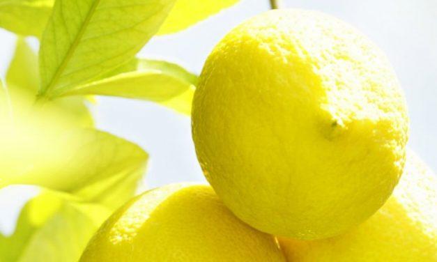 Citrus, a nyár legmenőbb illata