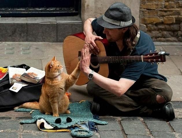 Bob, az utcamacska – A Street Cat Named Bob
