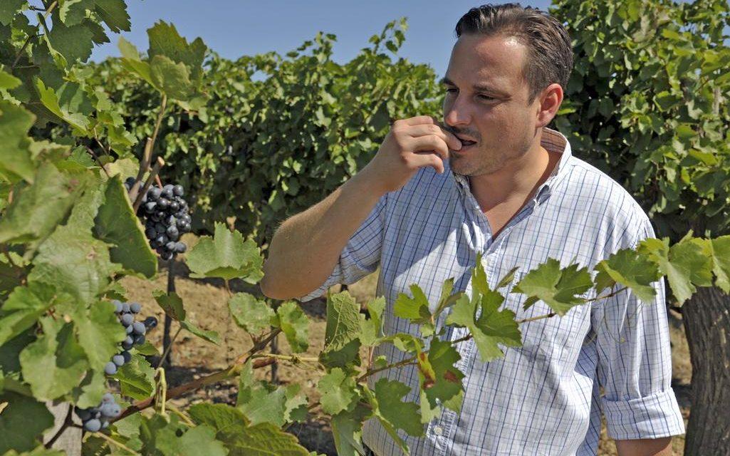 A Borháló új bora már a polcokon