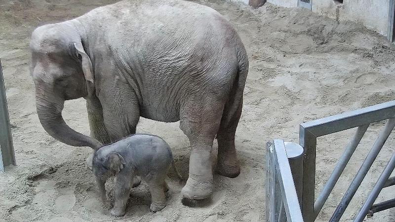 Arun lett a kiselefánt neve