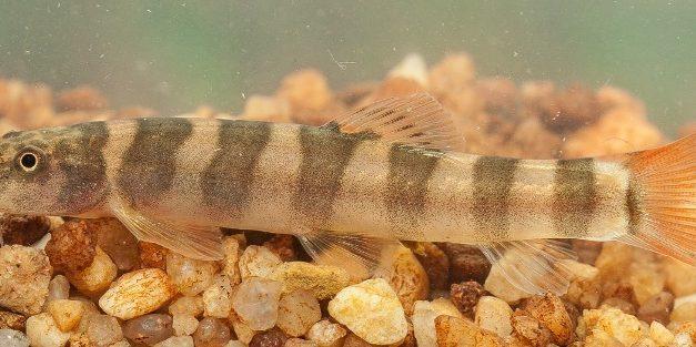 WWF jelentés: egy év, 115 új faj a Mekong térségben