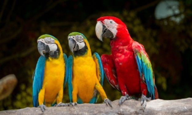 Színes, mint egy papagáj! – Rajzpályázatot hirdet a Campona