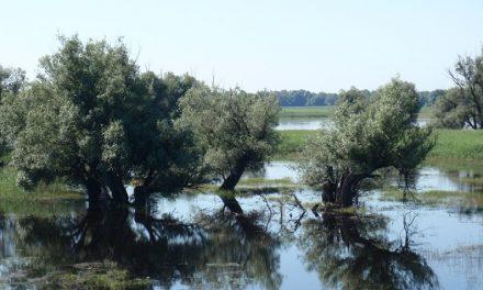 Veszélyben vannak éltető vizeink