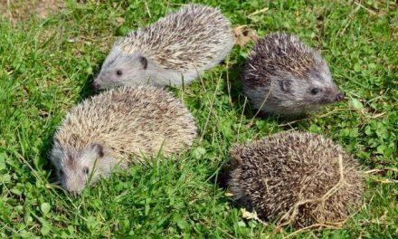 Állatkerti vadmentés uniós támogatással