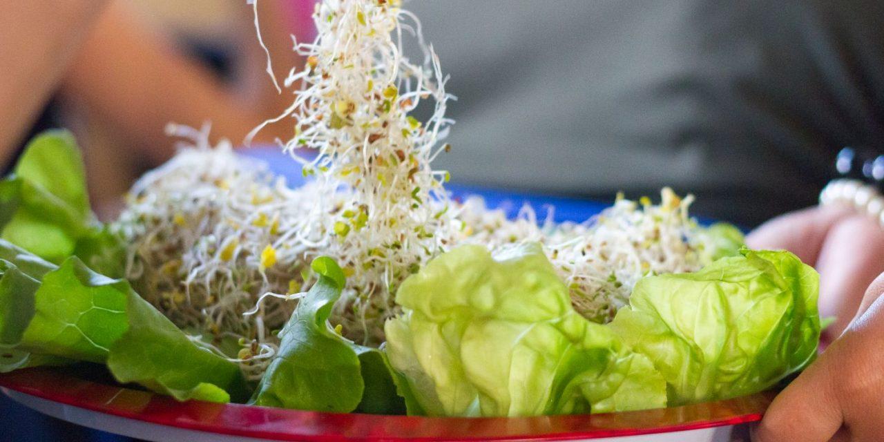 Hamarosan kezdődik a 22. Vegetáriánus Fesztivál