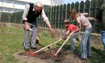 Ültess egy fát, s nem éltél hiába!