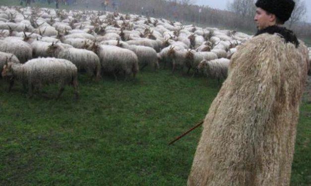 Jó pásztorok vagyunk-e, akikre Isten mások sorsát bízta?