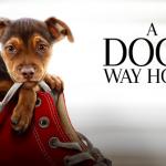 Egy kutya hazatér- Filmajánló