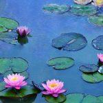 A művészet templomai – Monet és vízililiomai – A víz és fény bűvkörében
