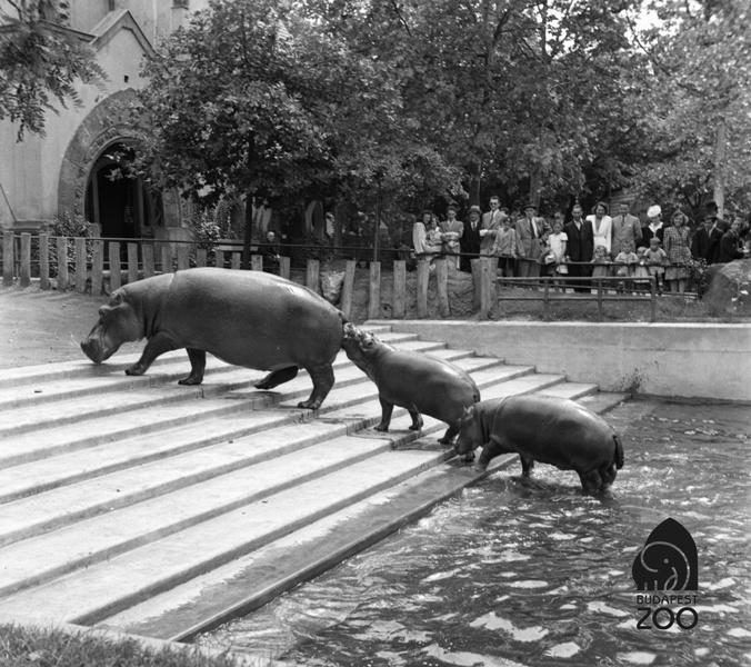 """""""ZOOmolj rá!"""" – A Budapest FotóFesztivál és az Állatkert közös fotópályázata"""