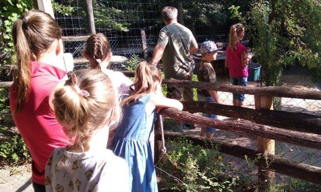 Élménydús nyári táborok a Kecskeméti Vadaskertben