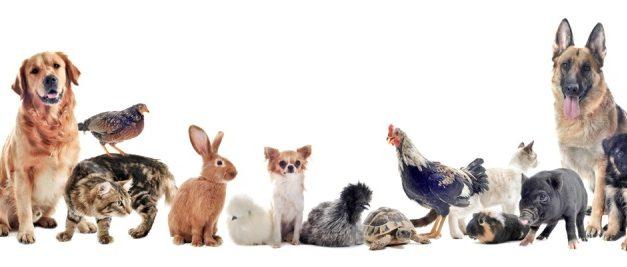 Szeretem az állatokat – A Montázsmagazin vers- és prózaíró pályázatának eredményhirdetése