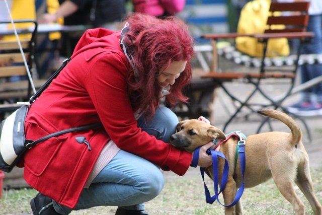 Akik a törődést feltétel nélküli szeretettel hálálják meg – avagy milyen is állatokon segíteni