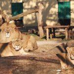 Országos Zoo-pedagógiai Konferencia – Kecskemét