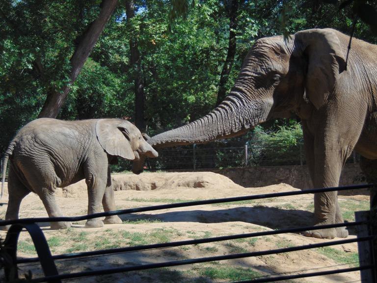 frekot erika-afrikai elefantok