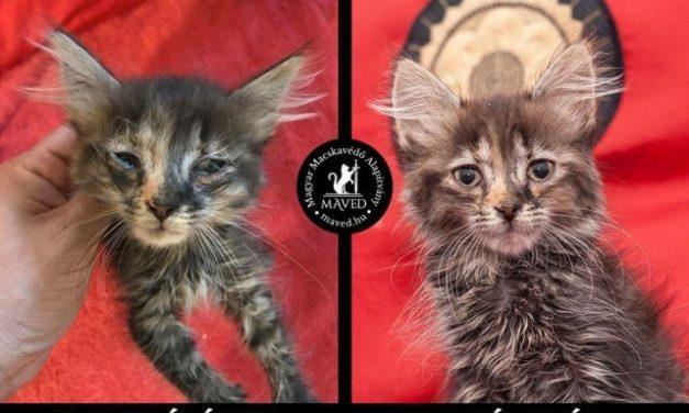 Mindent a cicákért a Magyar Macskavédő Alapítvánnyal
