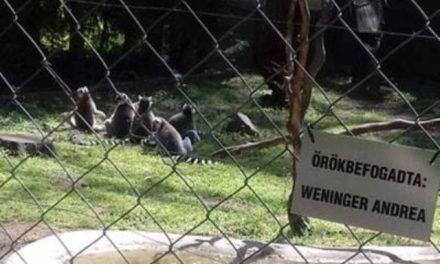 Én a makikkal vagyok – Nevelőszülőség az állatkertben