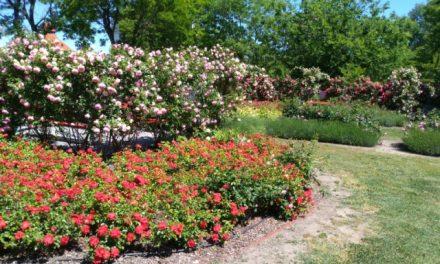 Boldogasszony Rózsakert – A boldogság forrása