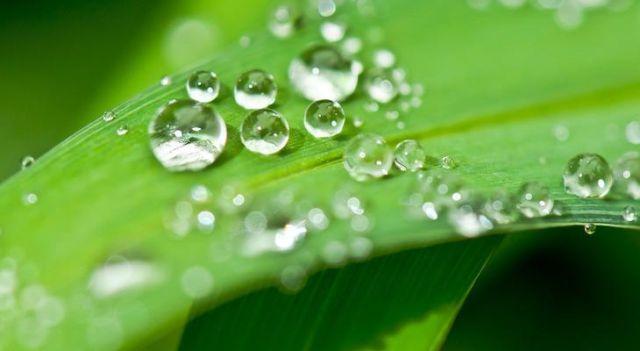 Esőkerttel a környezet védelmében
