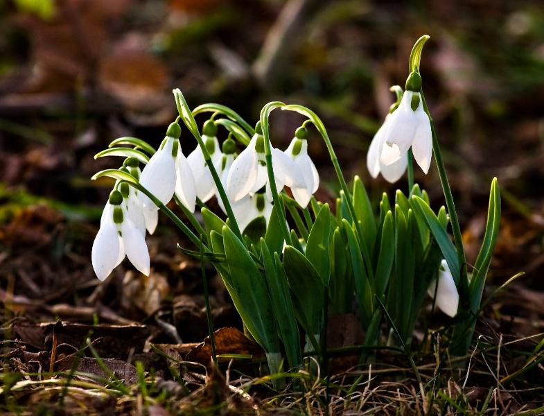 Hónapsoroló – Márciusi szokások, ünnepek, tennivalók