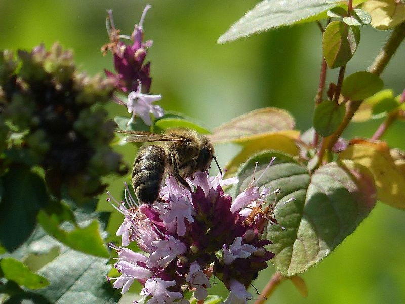 Klein Róbert méhész – A méhészetem története