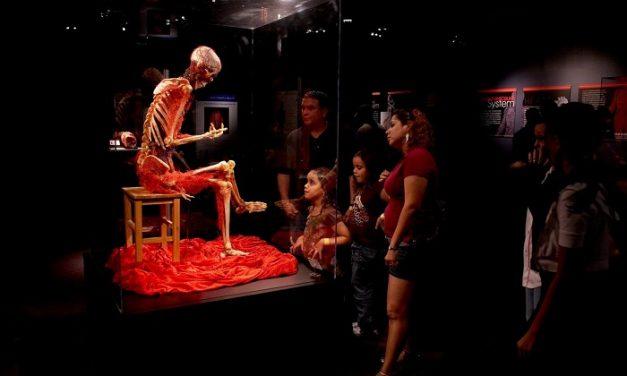 A BODIES 2.0. kiállítás újra nyit a Bálnában