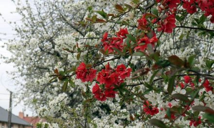 Május, Pünkösd hava – Hónapsoroló