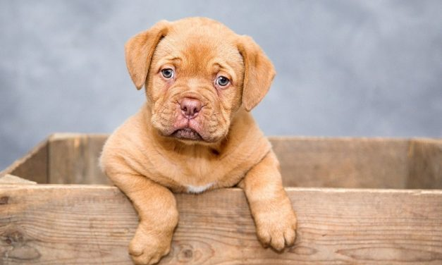 Megviseli kutyusodat a fogzás? Néhány tipp, amellyel segíthetsz rajta!