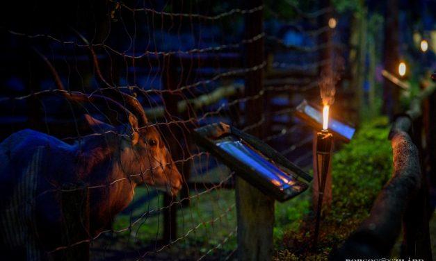 Tizedik Állatkertek éjszakája Kecskeméten is!