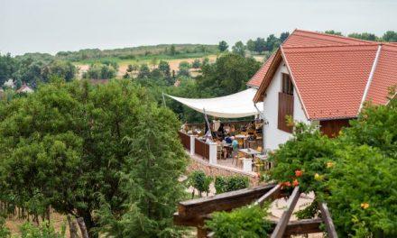 A Folly Európa élvonalában – Fejlesztések a 116 éves Folly Arborétumban